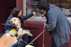 Une campagne bruxelloise de sensibilisation de l'accès des chiens d'assistance