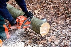 Bomen Versailleslaan Neder-Over-Heembeek gekapt zonder vergunning