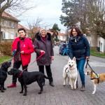 Voorstellen voor een lokaal dierenwelzijnsbeleid.